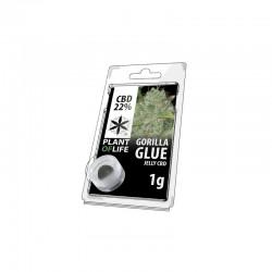 Gorilla Glue jelly hash CBD solid 22%