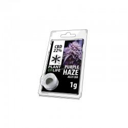 Purple Haze jelly hash CBD solid 22%