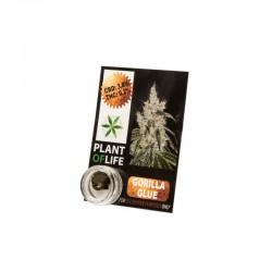 Gorilla Glue Solid CBD Hash 3,8%