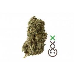 Kosher Tangie Kush | Amsterdam Genetics | 3 seeds