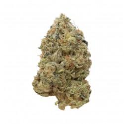 Tangerine G13 | Amsterdam Genetics | 3 seeds
